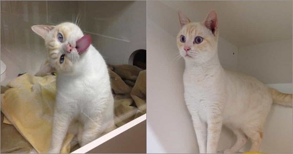 Shelter Cat Licks Window To Get Adopters' Attention And Find Forever Home
