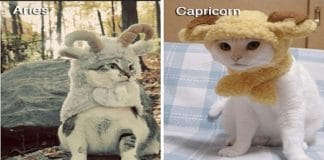 These Cats Dressed As Zodiac Signs Are Too Damn Cute!