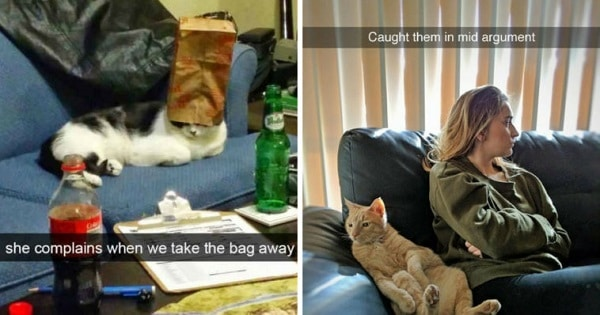 Top 10 Best Cat Snapchats From Last Year