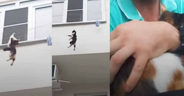 Watch Guy Save Falling Cat Using Only His Backpack