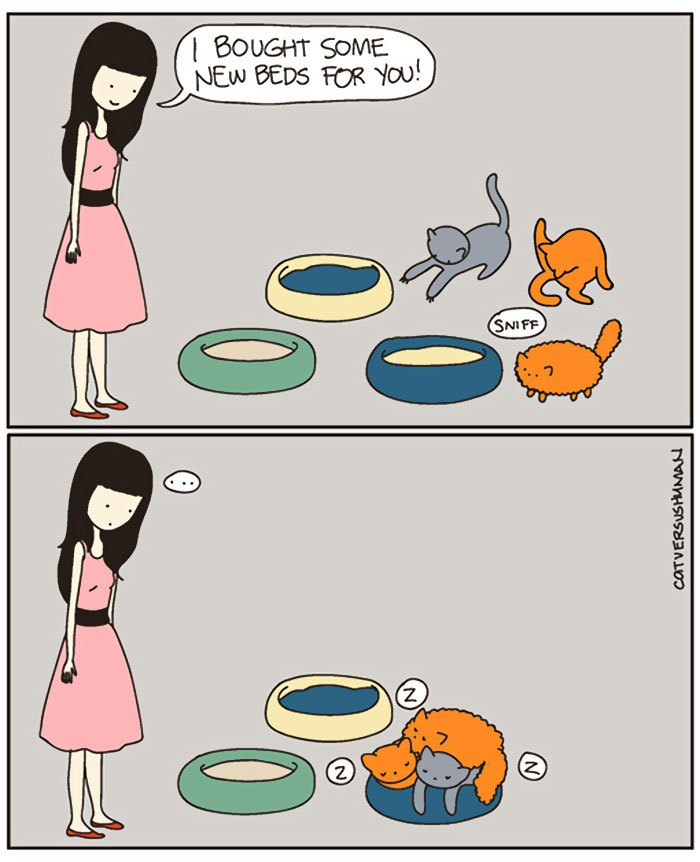 These 10 Hilarious Cat Comics Will Definitely Make Your Day! 3