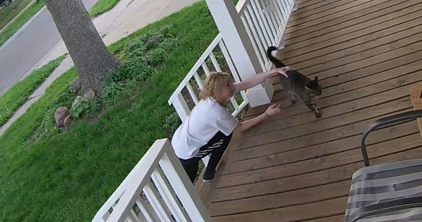 Cat Makes A Heroic Escape From Her Kidnapper!