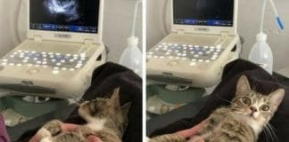 Check Out This Cat's Reaction When She Finds Out She's Pregnant!