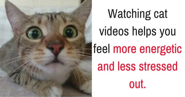 Science Confirms – Watching Cute Cat Videos Can Instantly Lift Our Mood!