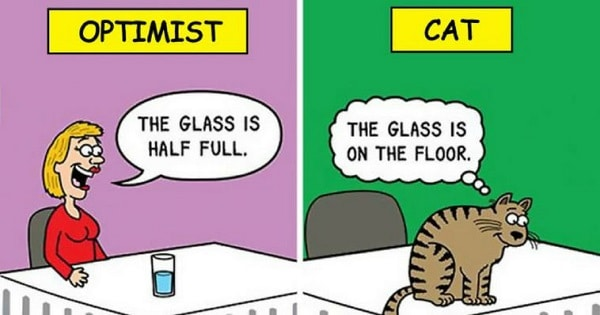These Funny Cat Cartoons Will Surely Make Your Day!