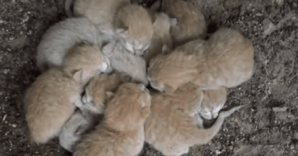 They found kittens abandoned and left alone, but then realized why they're huddling together