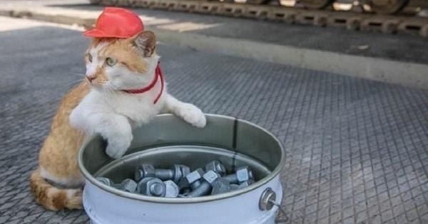 This Cat Managed to Do Something No One Has Done Before – Beat Vladimir Putin at Something!