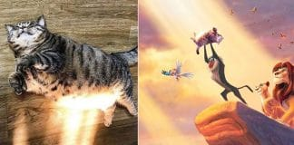 This Sunbathing Cat Gets Tossed Right Into A Photoshop Battle And The Results Are Awesome!
