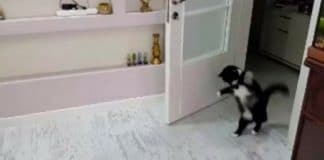 Enjoy – This Is Probably The Cutest And Funniest Cat Walk-Hop Forever!