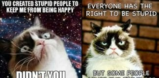 Here's What Grumpy Cat Has To Say About Stupid People