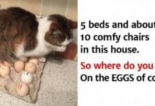 These Funny Photos Show Why Trusting A Cat Is A Foolish Thing To Do!