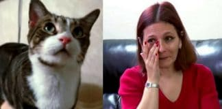 This Cat Refused To Let Her Owner Sleep And There Was A Terrifying Reason Behind It!
