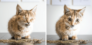 We Just Can't Stop Looking at These Pictures Of Cats High on Catnip!