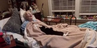 A Loyal Cat Refuses To Leave The Bed Of His Recently Deceased Best Friend!