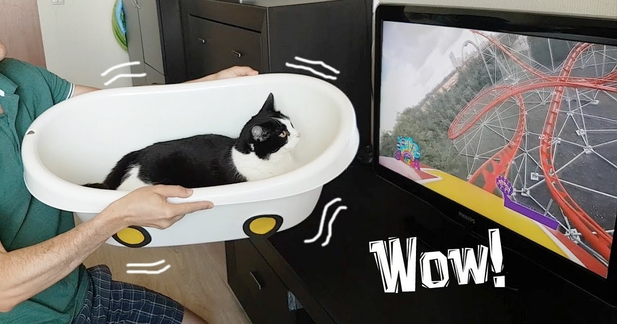 A Virtual Roller Coaster for Cats? Yes, Please!