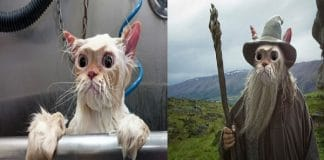 Photoshopped Pictures Of This Wet Kitty Will Crack You Up!