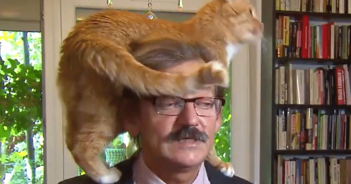 Take A Look at This Cat – It Decided It Needs Airtime in The Middle of His Owner's Interview! Hilarious!
