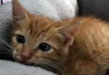The Latest IDIOTIC Trend – Throwing Out Kittens From Moving Cars in Florida!