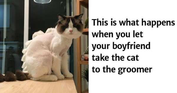 These Cats Will Make Their Humans Regret Taking Them To The Groomer!