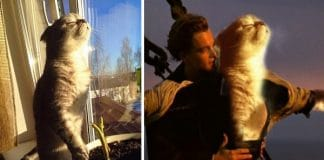 This Amazing Kitty Photoshop Battle Is Why We Can't Get Off the Internet!