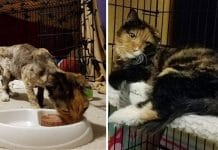 This Cute Cat Was Barely Breathing When She Was Found, But Take A Look At Her Now!