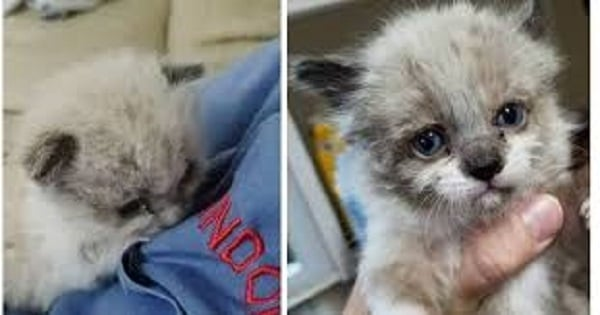 This Motherless Kitty Would Have Died Alone Near A Fence, But Take A Look At Him Now!