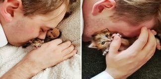 This Preemie Kitten Was Left To Die After Birth, But Destiny Had Other Plans!