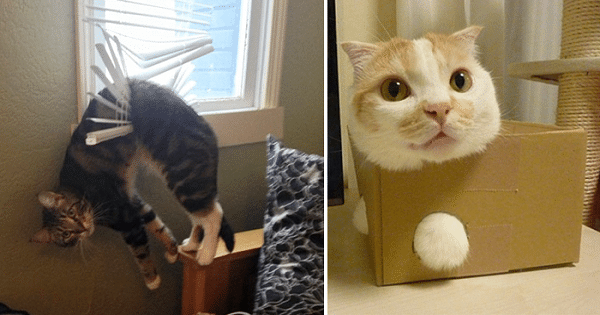 A Poll Shows That Cat Owners Need to Stop Their Pets Getting Into Trouble 1,350 Times a Year