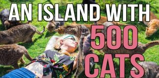 A Tropical Island with 500 CATS! Is This What Heaven Looks Like?