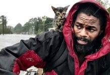 Kitten clings for life as man awaits rescue from Florence. The cat's name says it all!