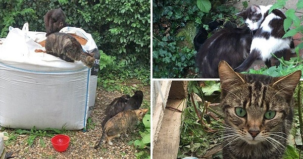 Locals 'heartbroken' after discovering 27 neglected cats at empty house