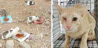 Meet Leslie Lewins – The British Woman Saving Cats in Oman!