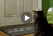 This Cat Waits By The Door Every Day At 12:00 For Something Special!