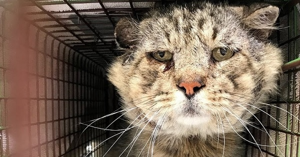 This Feral Senior Cat Was Given a Second Chance at Life and He Took It With Both Paws!