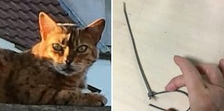 A Woman Comes Home to Find Her Cat Choked to Death!