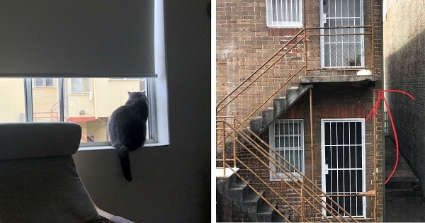 Cat Sees Something Out of the Window and Meows for Help!