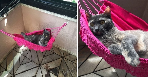 "Dad Gifts Cat With A Special ""Lazy Ethusiast's"" Tiny Hammock"
