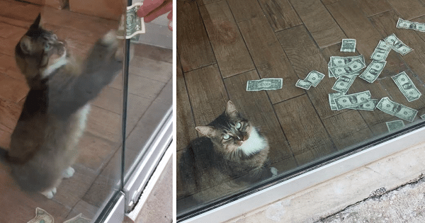 Feline Robin Hood? This Cat 'Steals' Money From People and Gives It To Charity!