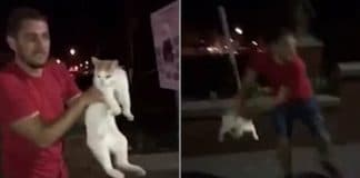 Man launches cat into air like a rugby ball as laughing friend films