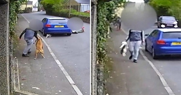 Thugs Who Set Their Dog on an Innocent Cat Receive Death Threats After Being Caught on Tape!