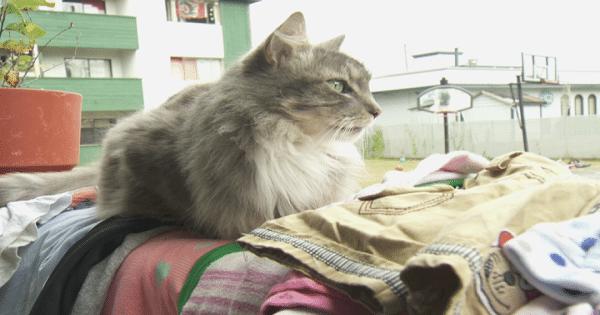 The True Life of a Cat Burglar