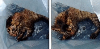 A Woman Comes Across a Mysterious Trash Bag, Then Hears Faint Meows Coming from Inside!