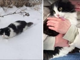 A Woman Saves a Freezing Cat and She Thanks Her in the Sweetest Way!