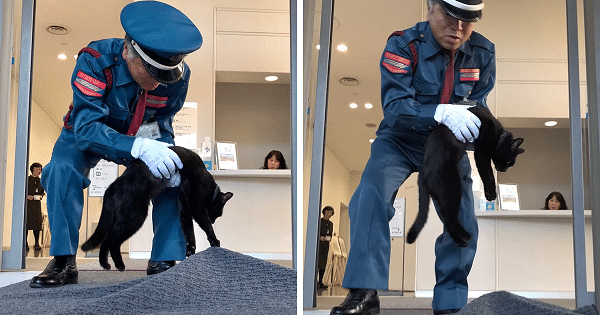These Two Cute Cats Have Been Trying to Find a Way into a Museum for Years!