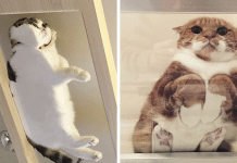 12 Hilarious Reasons Why Every Cat Owner Should Get A Glass Table