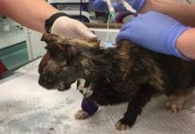 A Family Cat Is Fighting for Its Life After a Horrifying Acid Attack!