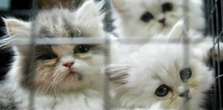 A Secret US Government Project Killed Hundreds of Innocent Kittens Per Year!