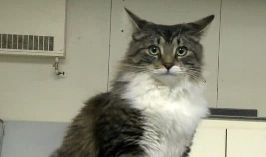 Cat Mistakenly Shipped More Than 700 Miles From Home After Sneaking Into Box