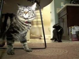 Two Cats Live Alone In $1,500-A-Month Silicon Valley Studio Apartment