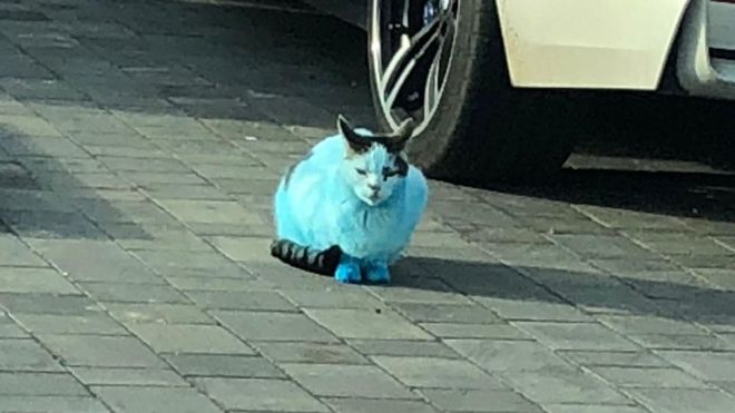 """Cats and dogs were left resembling """"Smurfs"""" after Clacton ink fire 1"""